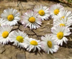 Cursus Zelf helpen met homeopathie