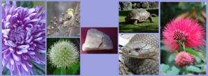 Dieren, planten en mineraal